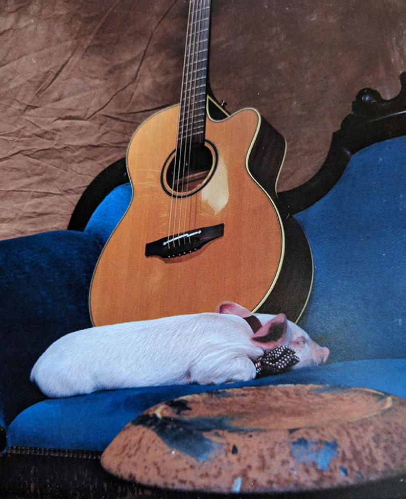 pig sleeping guitar