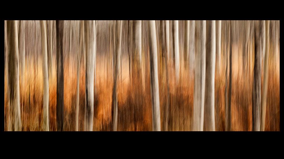 monet forest