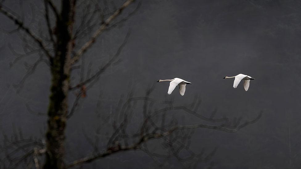 2 birds flying