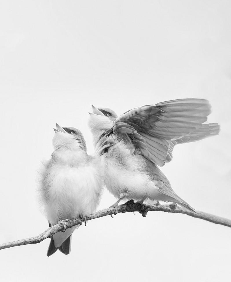 birds twig