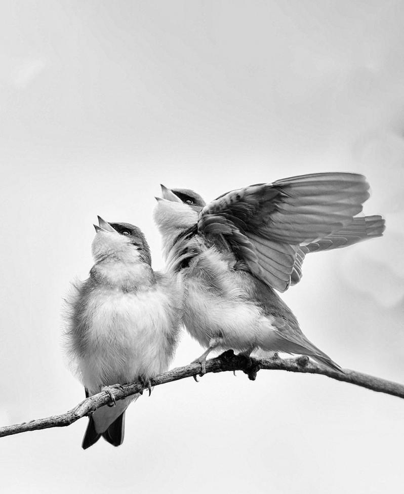 pair birds