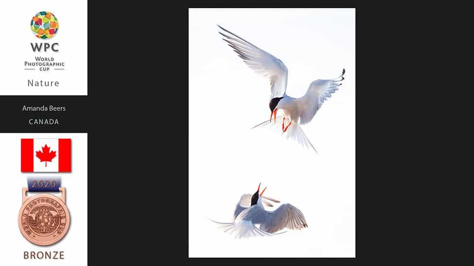 BIRDS FIGHTING FLYING