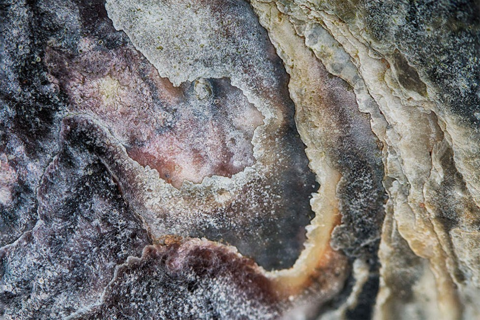 A focus stacked macro image of an oyster shell makes an abstract fine art piece by Debbie Brady of Oyster Art.